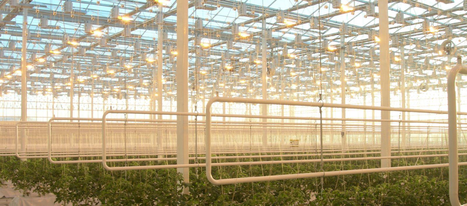 Asimilačné osvetlenie pre skleníky fóliovníky