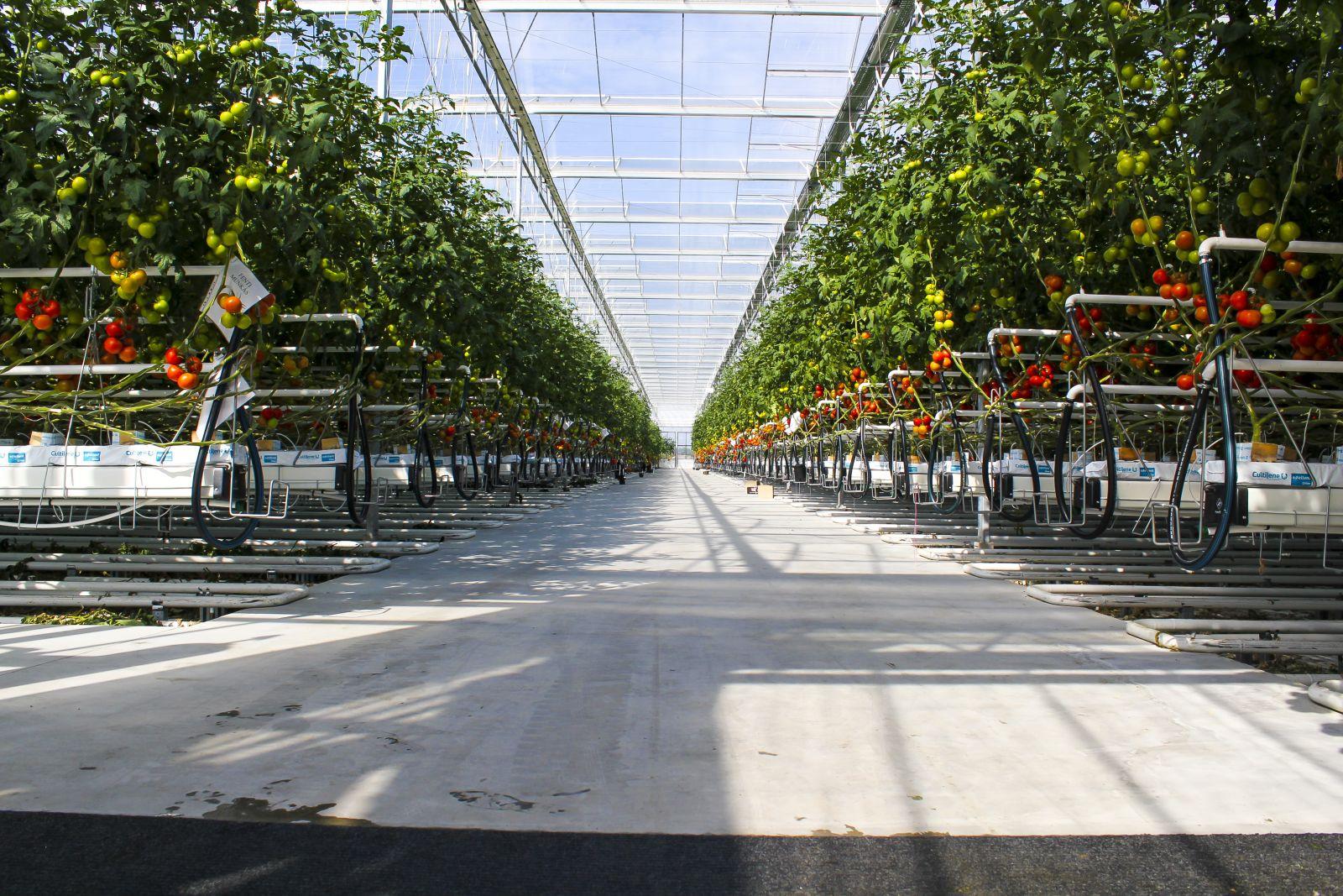 Pestovateľské žľaby pre skleník fóliovník
